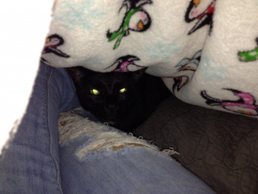 Little black cat, hiding away...