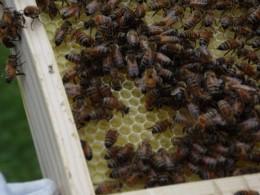 New split hives doing well.