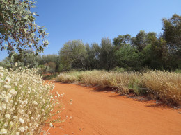 Wouldn't it be cool if your treasure hunt was in a backyard that looked like this? - Photo that I took of Alice Springs Desert Park, NT, Australia