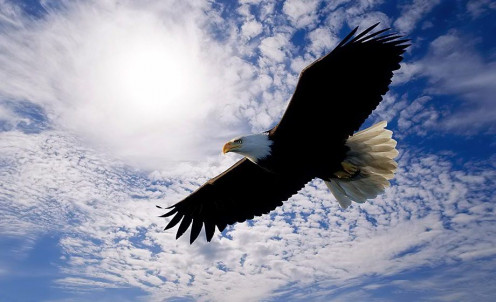 An eagle soaring high