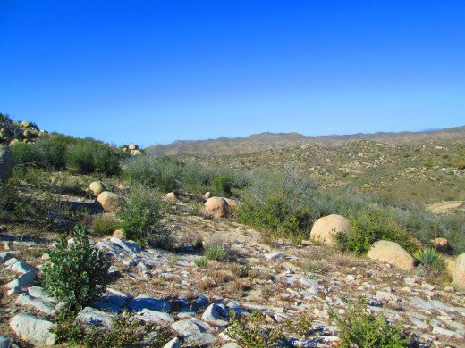 Chaparral and boulders on a hillside.