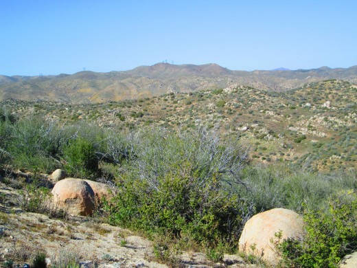 Looking out across the chaparral landscape.