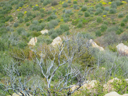 Looking down on some shrubs and boulders.