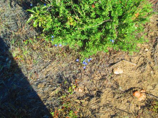 Little down on some vegetation.