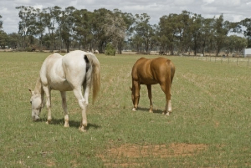 Land with room for horses to roam