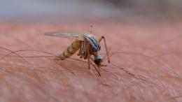 Malaria is spread through mosquitos
