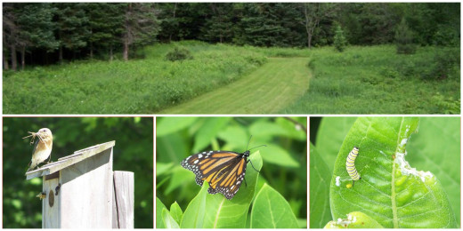 Milkweed Garden is to the left of the top photo.