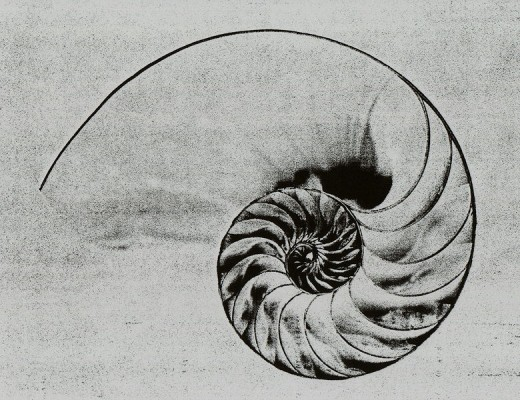 A cut of the nautilus shell, showing us the spiral in its most natural form.