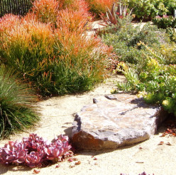 "Rocks and paths are called ""hardscape,"" whereas the plants themselves are referred to as ""softscape."""