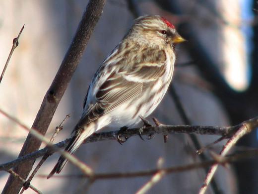 Taken in Ontario Canada