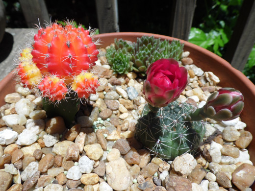 Cactus displaying a bright red bloom.