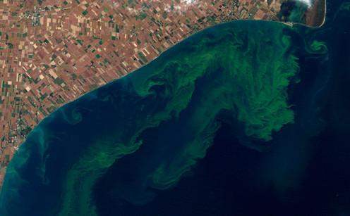 Example of Algae Bloom