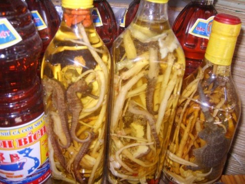 Pickled Sea Horses