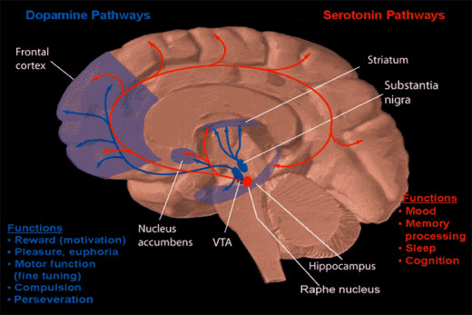 Dopamine and Serotonin Pathways