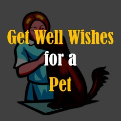 Get Well Wishes for a Pet: What to Write in a Card