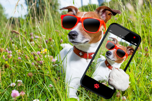 It's so easy to take selfies, even your dog can do it!