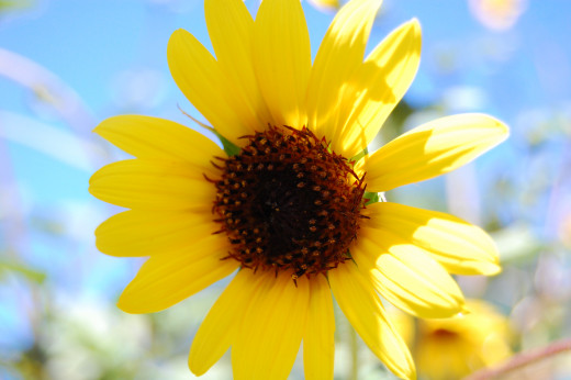 I love the bright yellow against the blue sky.