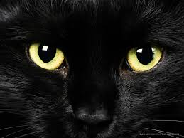 A black cat often associated with Witches.