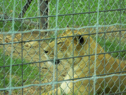 Our 2014 Family Vacation - Day One Wild Wilderness Drive Through Zoo and Ft. Smith, Ark,
