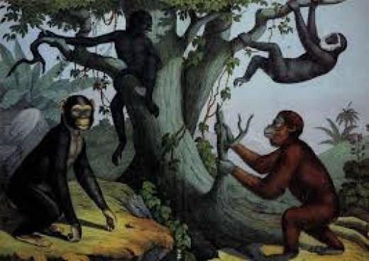 Studies Have Found That Female Primates Are Not Monogamous