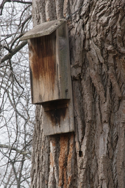 A simple bat house.