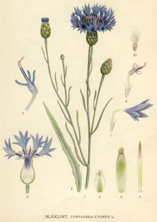 Billider of Norden's Flora