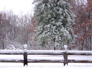 First snow fall of the season