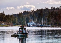 A small tug boat on a quiet morning with the Lakebay Marina in the background.