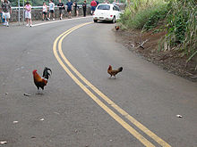 So that is why the chicken crossed the road!