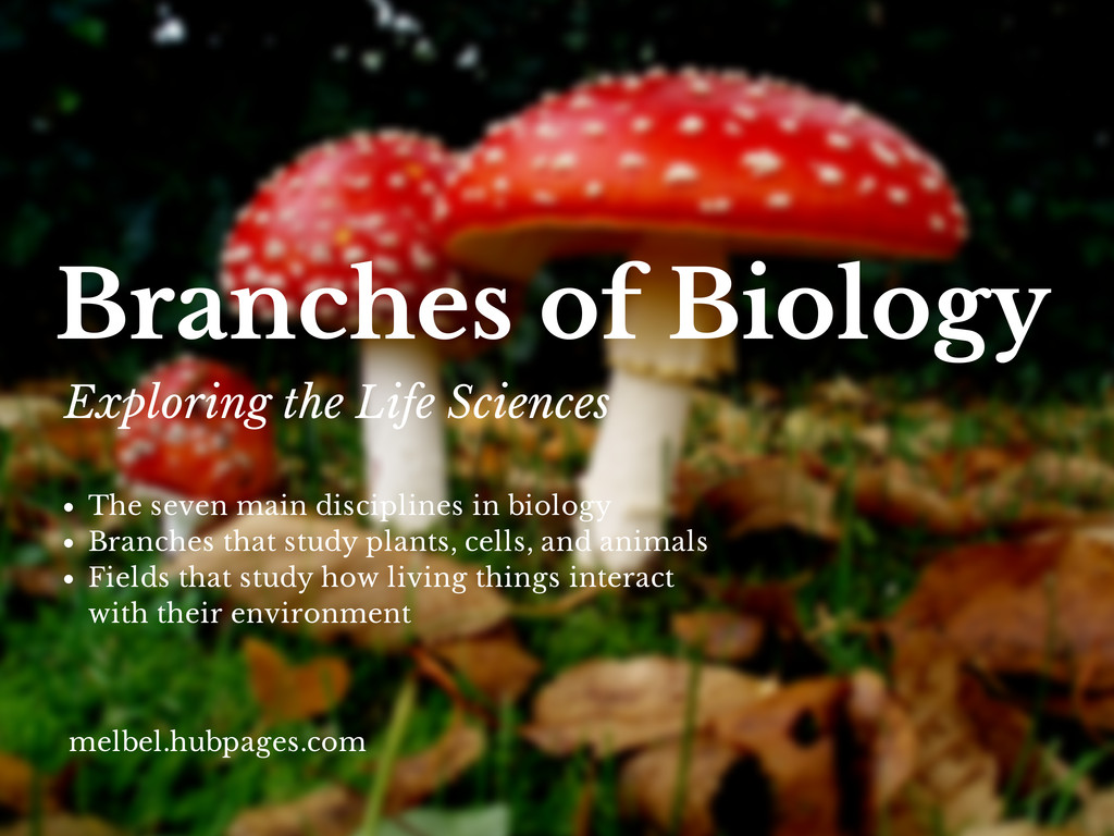 sub branches of biology Biology is the field of science that studies all living things although this  encompasses numerous topics, biology can be divided into eight main branches.
