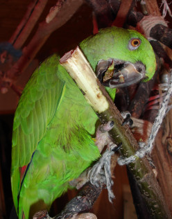 Image: Chewing Toys Can be as Simple as a Safe-For-Chewing Unsprayed Tree Branch