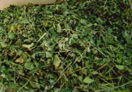 Dried Malunggay Leaves
