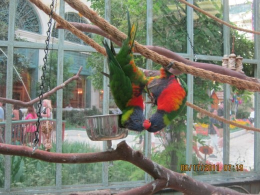 Photo of birds that look like they are kissing! I took this photo at the Bellagio Hotel Conservatory in Las Vegas, during their summer exhibition.