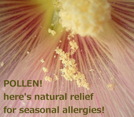 Pollen - the source of seasonal allergy misery