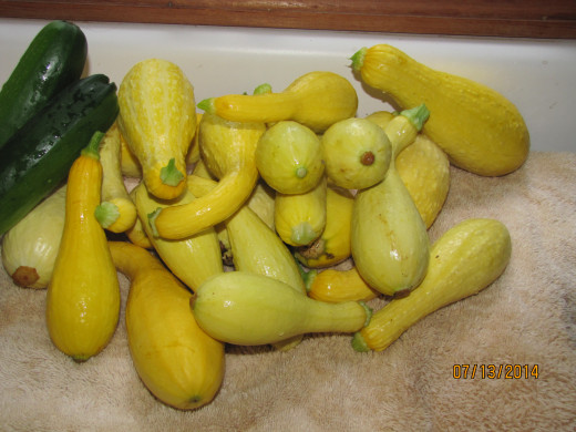 Squash - waiting to be made into a squash casserole.