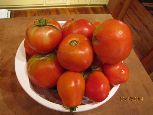 Tomatoes - Just off the Vine