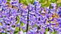 How to Photograph a Flower Garden
