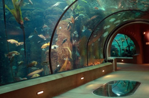 The Newport Aqarium features all types of sea life including sharks and whales.