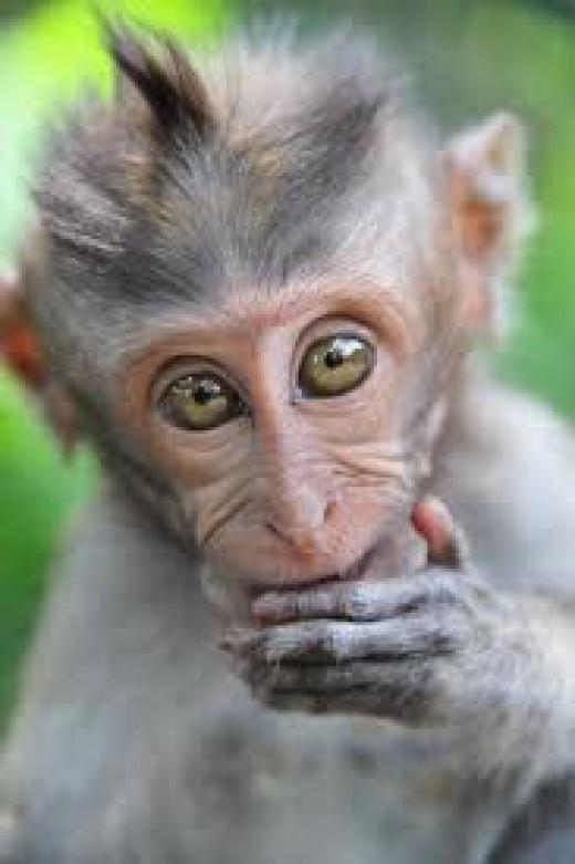 Baby Pet Monkey Punkie Looked Exactly Like This