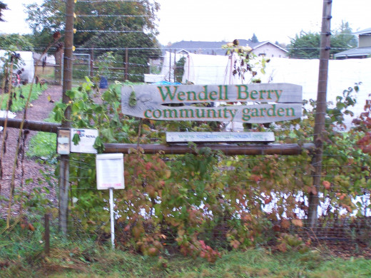 Community gardens in Olympia