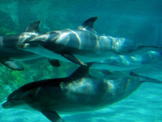 Dolphins are major smartypants of the animal kingdom.