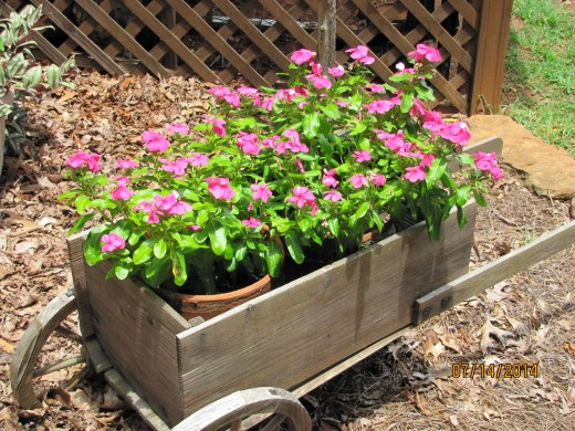 Impatiens growing in two pots placed in a garden cart.
