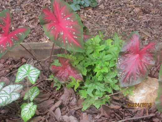 Combine annuals with perennials.