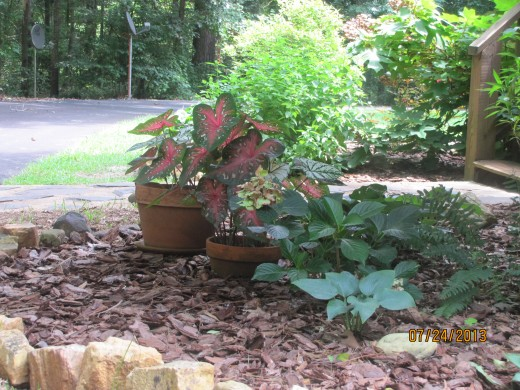 Fern returns yearly; Caladiums from the pots can be dug and saved for next year, Hosta returns yearly and can be sub-divided.