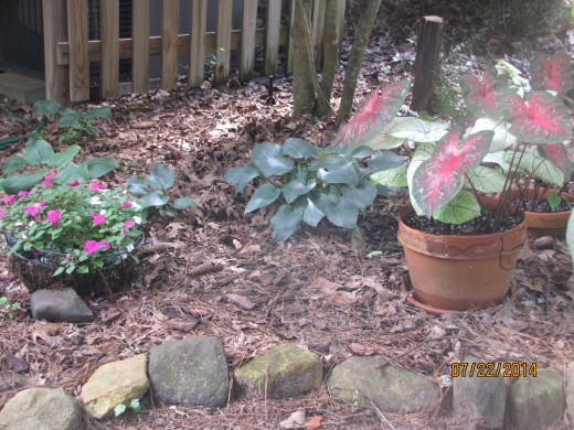Notice that I use rocks to add to the structure and impact to the garden.
