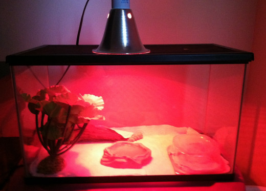 Gecko Habitat