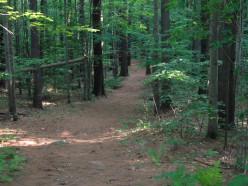 Maine Nature Walk: Thorncrag Nature Sanctuary in Lewiston