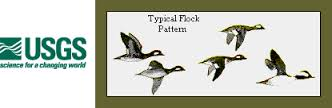 Typical Flock Pattern