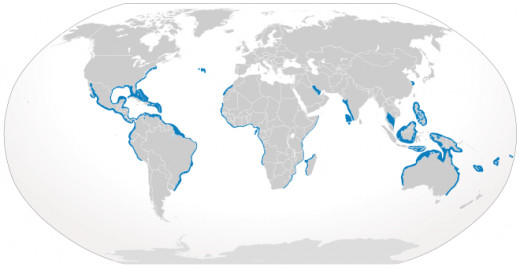 The blue areas represent the places where Bull Sharks can be found.