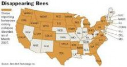 Facts On The Bee Decline: Ways To Help Restore The Bees